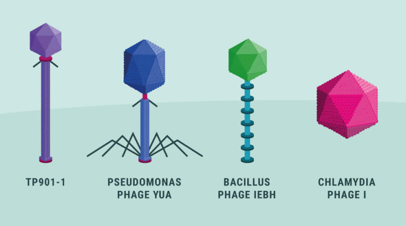 virus dtu biotech academy videnskabelig illustration